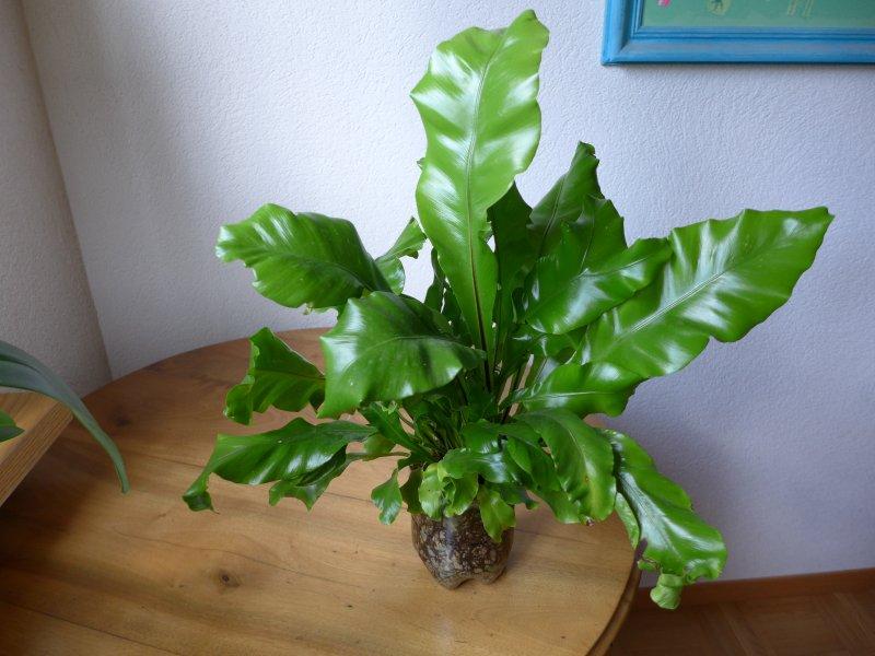 Orchideenforum